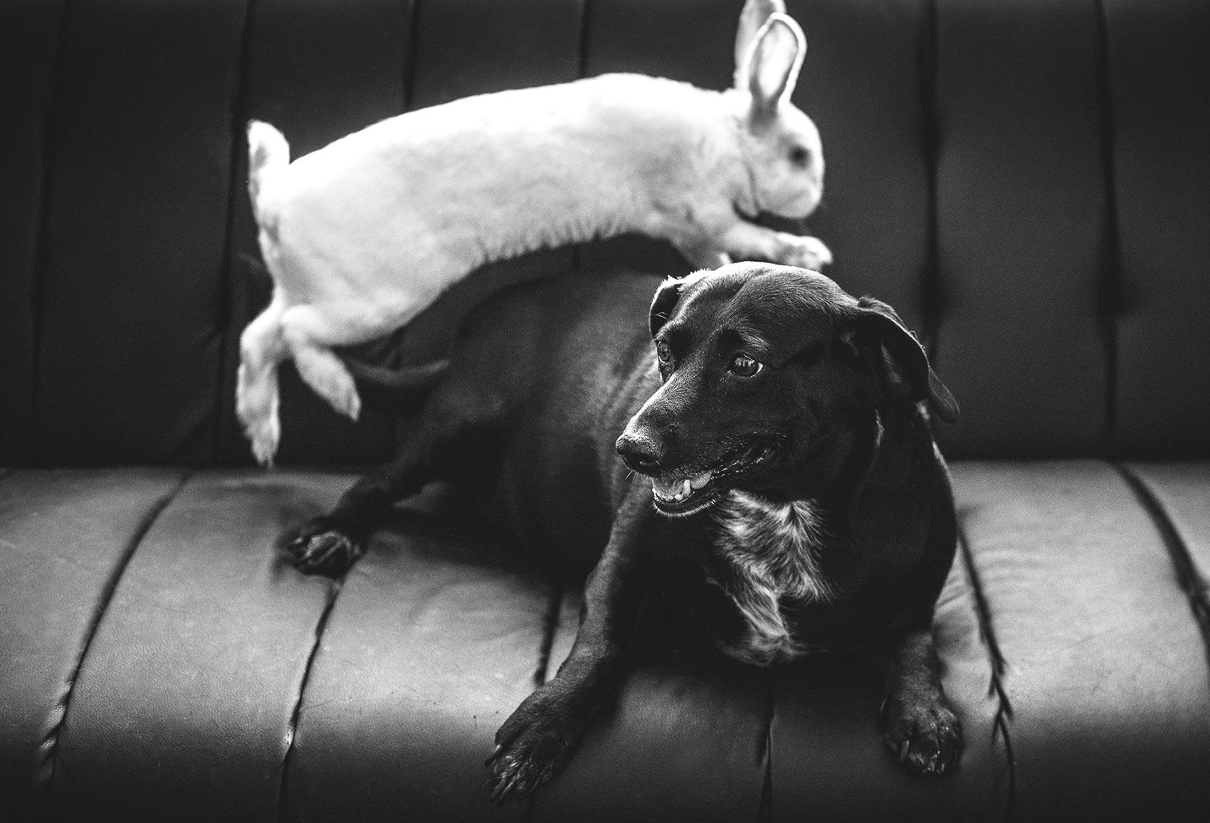 agence de communication pour animaux