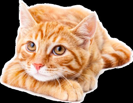 agence-hudikforanimals-chat-roux