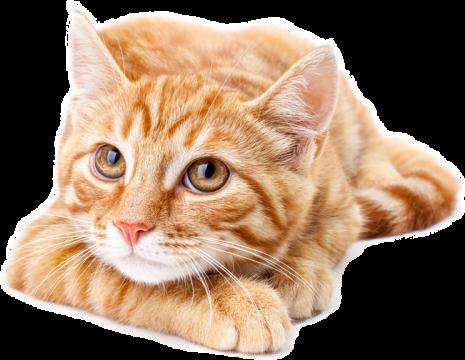 hudikforanimals-chat-roux