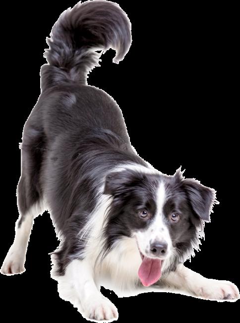 hudikforanimals-chien-noir